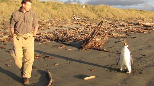 Nieuw-Zeeland zwaait Happy Feet uit