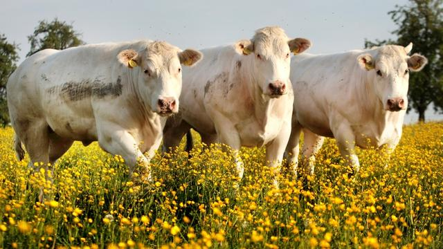 Supers en boeren akkoord over duurzaam vlees