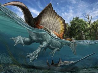 Lichaam van dinosaurus blijkt geëvolueerd om te zwemmen