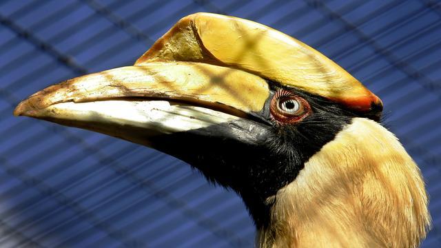 Gestolen vogels Avifauna zijn ton waard