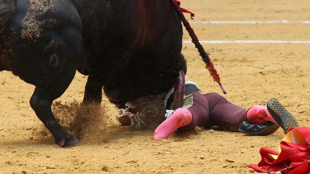Voor het eerst in dertig jaar Spaanse torero door stier gedood