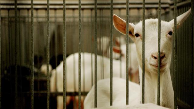Stijging van aantal dierproeven in 2014
