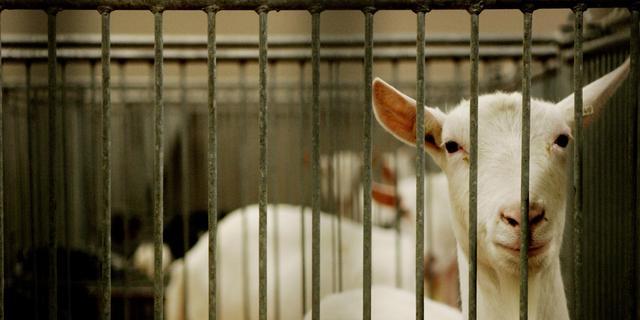 Dijksma woedend op Brussel om rechtszaak dierproeven