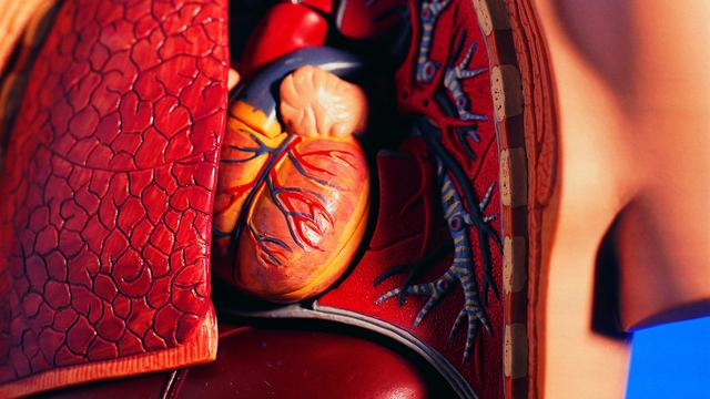 Afknellen ledematen helpt hart tijdens operatie