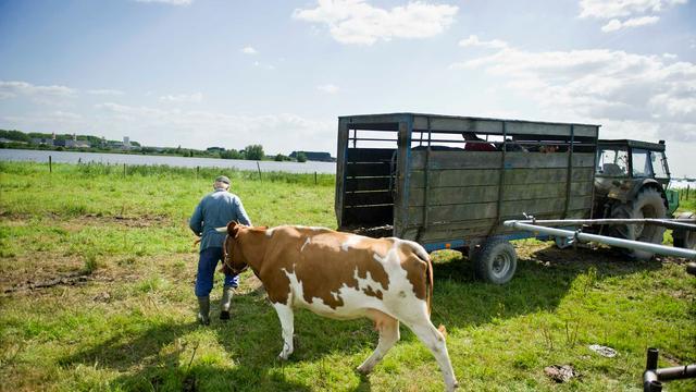 Wakker Dier protesteert tegen beleid biologische melkkoeien