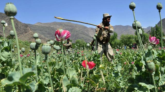 Opiumproductie Afghanistan dit jaar gehalveerd