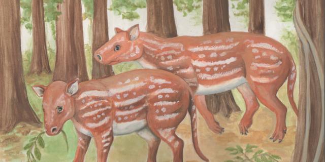 Verre voorouder van paard opgegraven