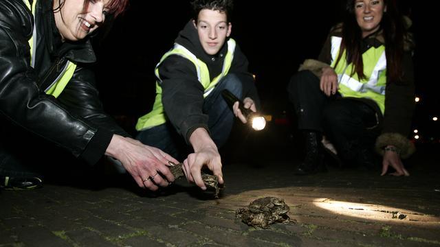 Vrijwilligers helpen 230.000 amfibieën met oversteken