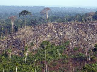 Tien procent van bomenkap te wijten aan mijnactiviteiten
