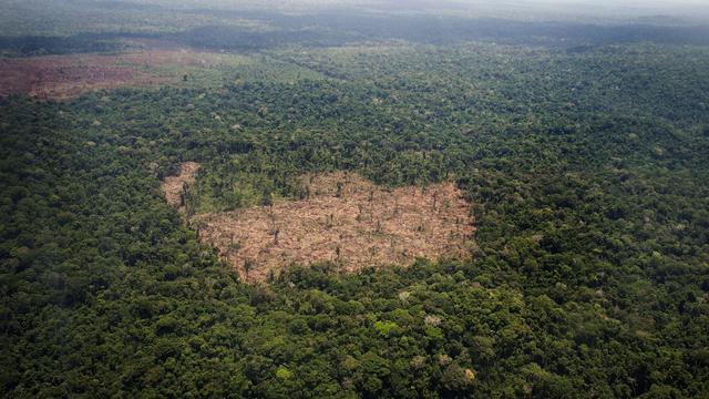 Amazonegebied verliest verrassend veel bomen door overstromingen