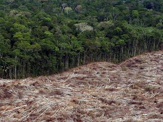 Leefgebieden van veel soorten verdwijnen door ingrijpen van mens