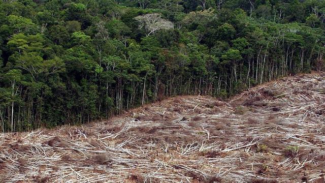 Opname CO2 door Amazoneregenwoud verslechterd door droogte