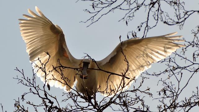 Vogels ontsnappen uit Safaripark Beekse Bergen na instorten volière