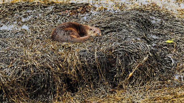 'Provincie moet otter beter beschermen tegen aanrijdingen'