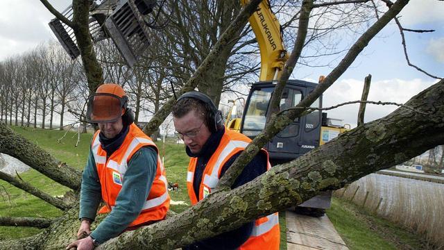 Noodkap vijftien bomen in Schalkwijk