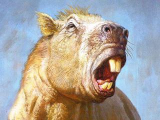 Grootste knaagdier ooit gebruikte tanden als wapen