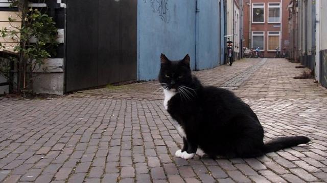 Verdachte van doodtrappen Utrechtse cafékat in april voor de rechter