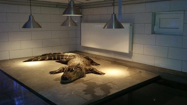 Dierenpolitie treft drie krokodillen aan in kelders Heerlen