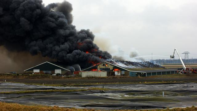 40.000 kippen dood bij brand in Veendam