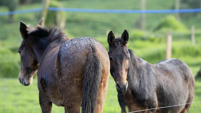 Paardenbeul slaat meerdere malen toe in Twente