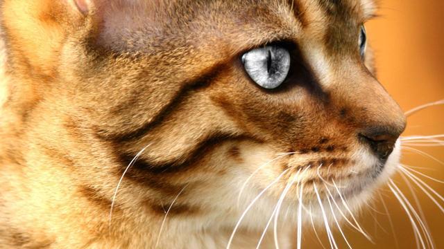 Ingemetselde kat na vier weken bevrijd uit badkuip