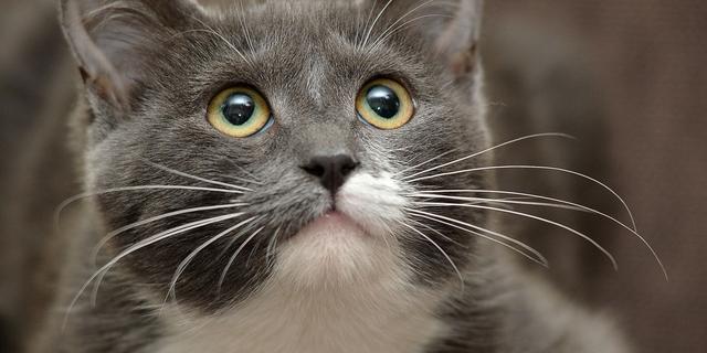 Kattencafé opent de deuren