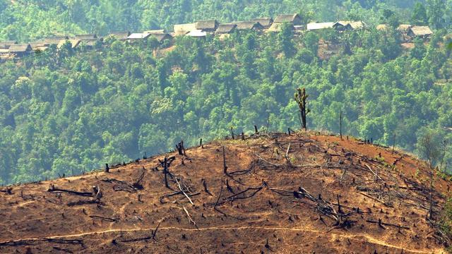 Bossen wereldwijd steeds verder gefragmenteerd