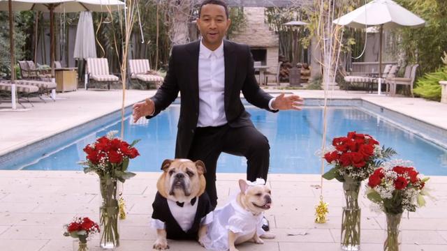 John Legend zingt op hondenbruiloft