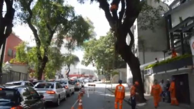 Omgewaaide bomen zorgen voor gevaar in São Paulo