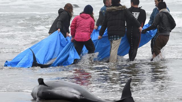 Dolfijnen spoelen aan op strand Tokio