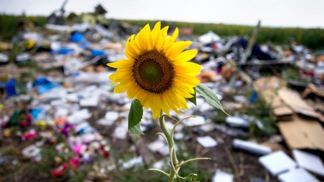 Museum Amstelveen herdenkt ramp MH17 met zee van zonnebloemen