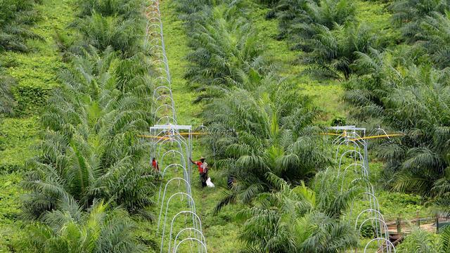 Invoer palmolie na jaren weer toegenomen
