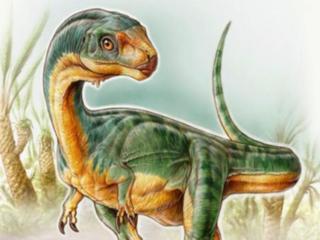 Dino had vreemde combinatie van lichaamskenmerken