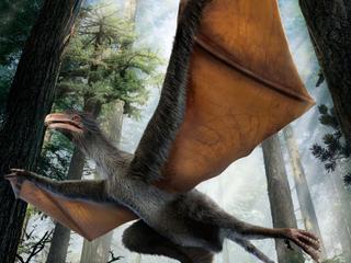 Onduidelijk of dier ook echt kon vliegen