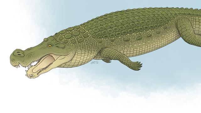 Prehistorische krokodil had tanden 'zo groot als bananen'