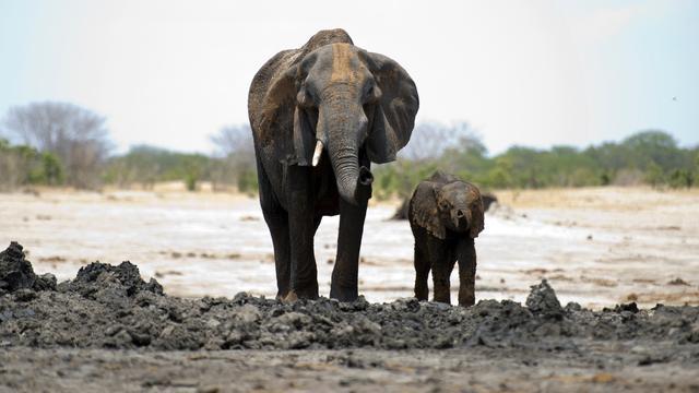 Goed nieuws-overzicht: Veiligste vliegjaar ooit en China doet ivoor in de ban