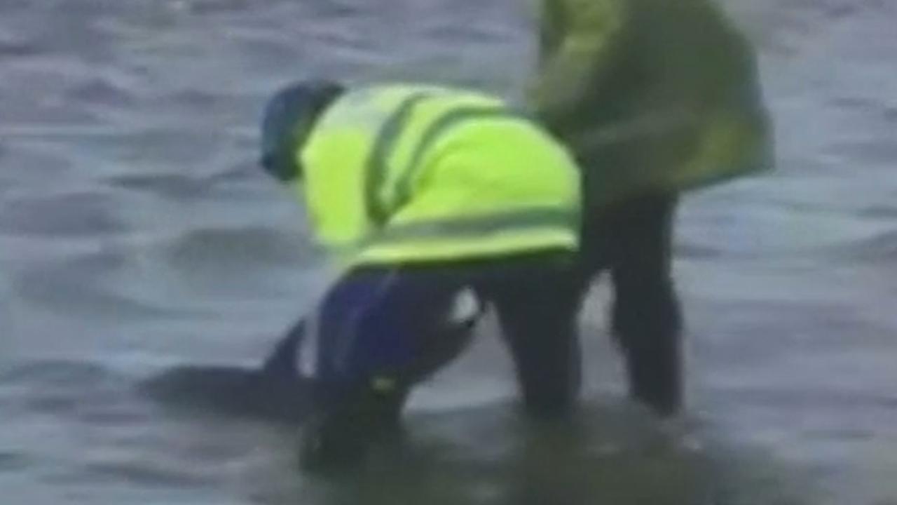 Britse reddingswerkers begeleiden gestrande dolfijn naar zee