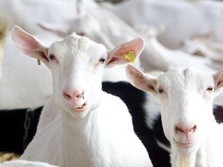 Aantal koeien in stallen en weides gedaald