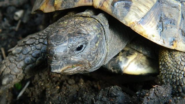 Fossiel reuzenschildpad in Beieren gevonden