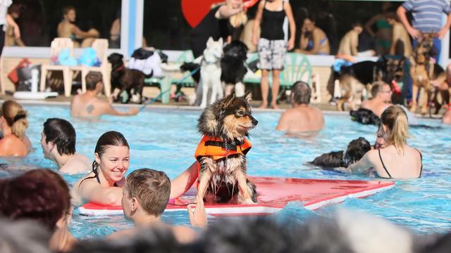 Hondenplons in buitenbad van zwembad De Hoorn op zondag