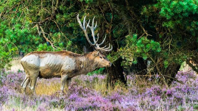 'Groeiende belangstelling voor wilde dieren verstoort natuurlijk gedrag'