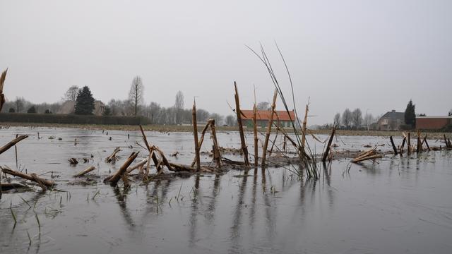 Licht winters in Brabantse Wal