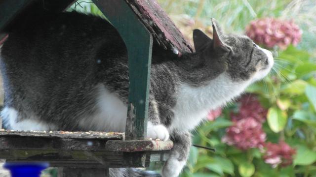 Brutale, poepende en krijsende katten in de buurt? Dit kun je doen