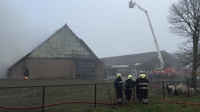 Brand in schuur Wieringerwerf doodt kalveren