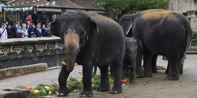 'Dierentuin Hannover mishandelt jonge olifanten'