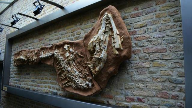 Zeldzaam skelet mosasaurus onder de hamer