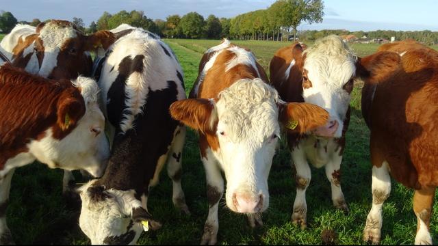 Kabinet steekt half miljard in opkopen en verduurzamen boerenbedrijven