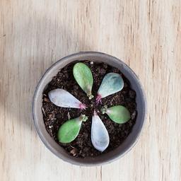 Zo kun je plantjes stekken (ook zonder groene vingers)