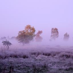 Eerste matige vorst van deze winter gemeten in Zuid-Limburg