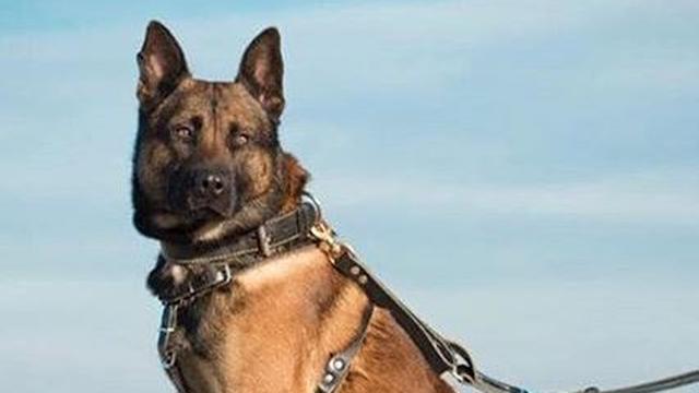 Politiehond twee keer ingezet bij bedreiging en inbraak in Goes